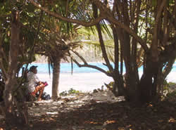 Shady area perfect for reading on Flamenco Beach